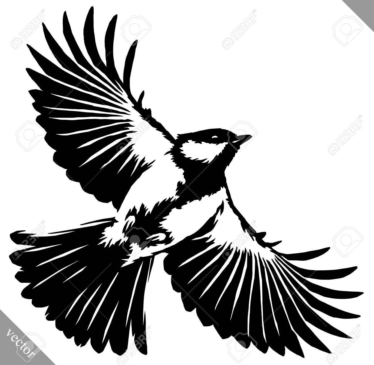 Noir Et Blanc Peinture Linéaire Dessiner Tit Vecteur Illustration Oiseau