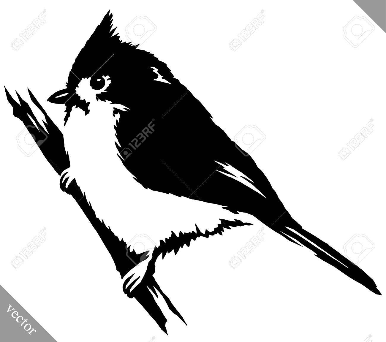 Schwarz Weiß Lineare Farbe Kardinal Vogel Vektor Illustration