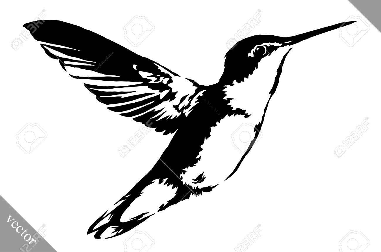 black and white linear paint draw hummingbird vector illustration rh 123rf com hummingbird ventures ii comm va hummingbird vector