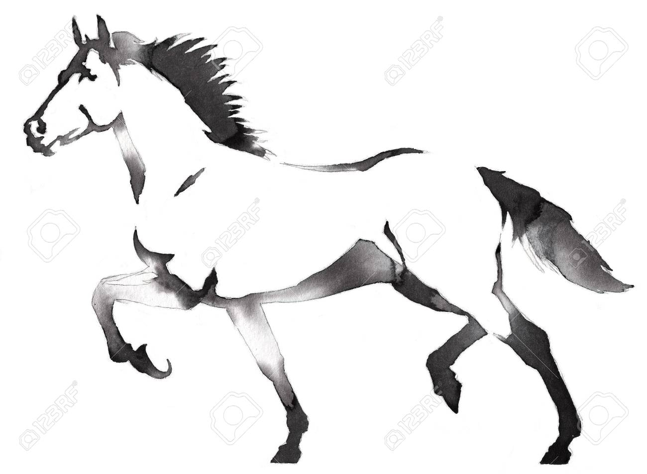 Black And White Painting With Water And Ink Draw Horse Illustration Stock Photo Picture And Royalty Free Image Image 66758248