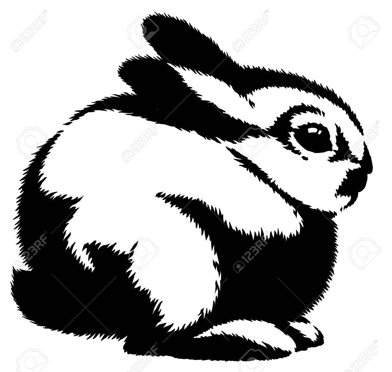 Blanco Y Negro Dibujo Lineal Conejo Ilustración Fotos Retratos