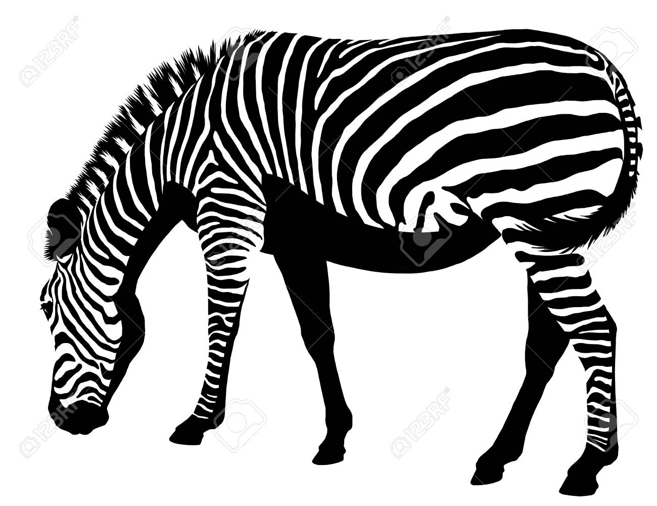 Großartig Zebra Etikettenvorlagen Galerie - Entry Level Resume ...