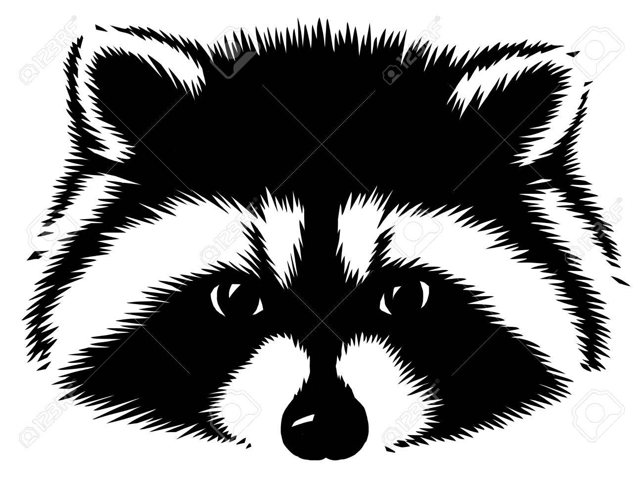 Black and white linear paint draw raccoon illustration stock illustration 74560834