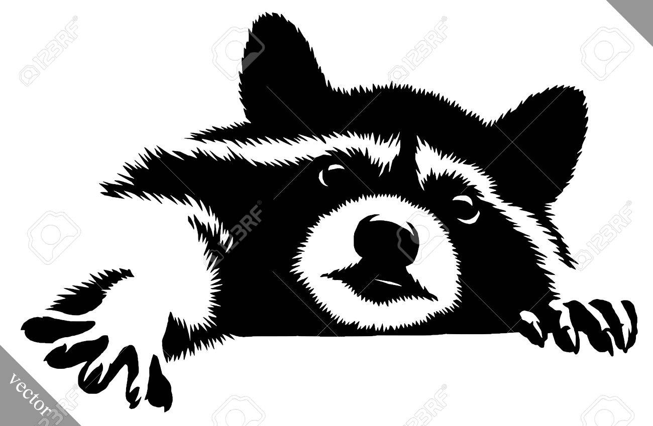 Black and white linear paint draw raccoon vector illustration stock vector 74560911