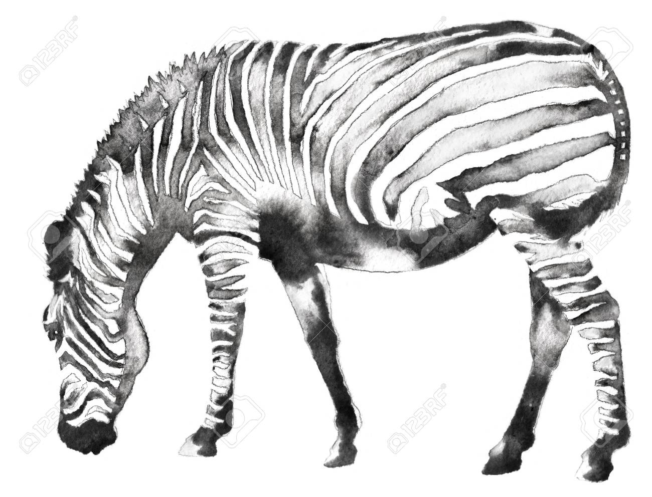 Black And White Monochrome Painting With Water And Ink Draw Zebra