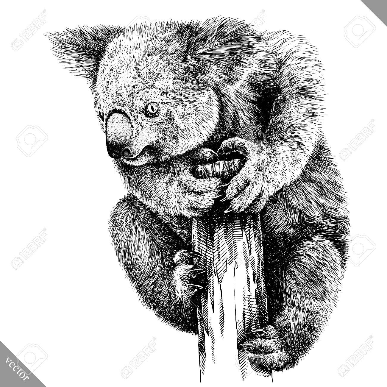 Black and white engrave isolated koala illustration stock vector 85022584
