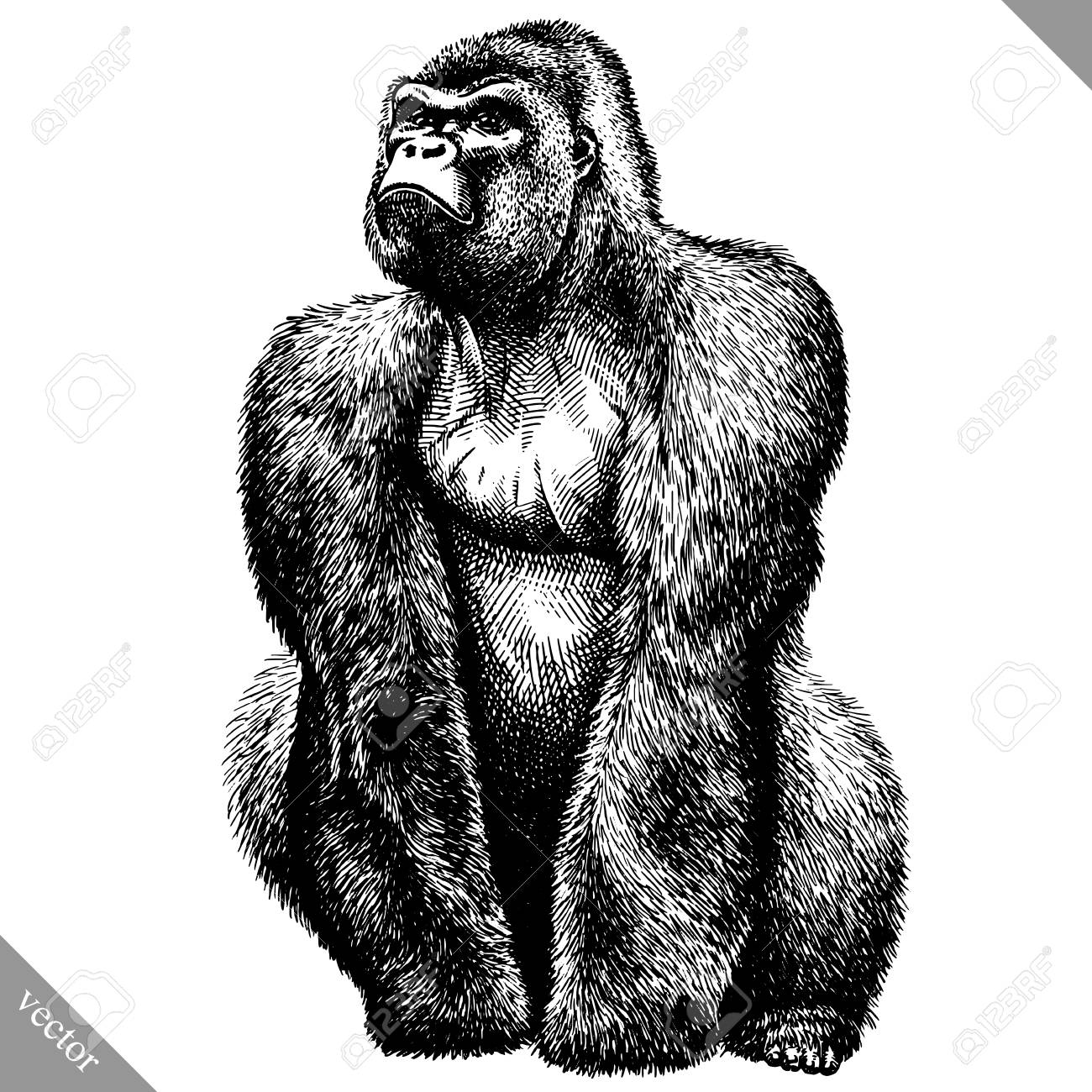 black and white engrave isolated monkey vector illustration - 91102960