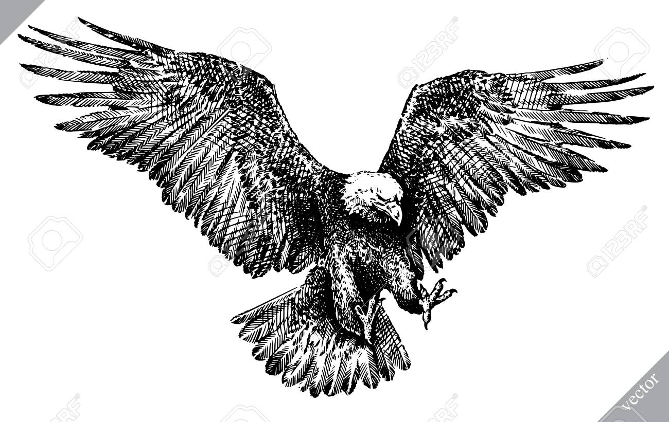 Black and white engrave isolated eagle vector art illustration stock vector 98476108