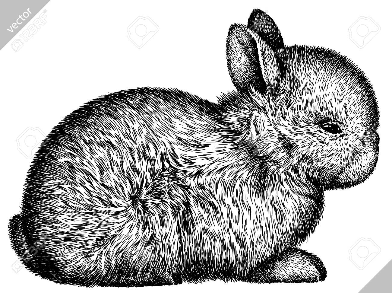 black and white engrave isolated rabbit vector illustration - 149163678