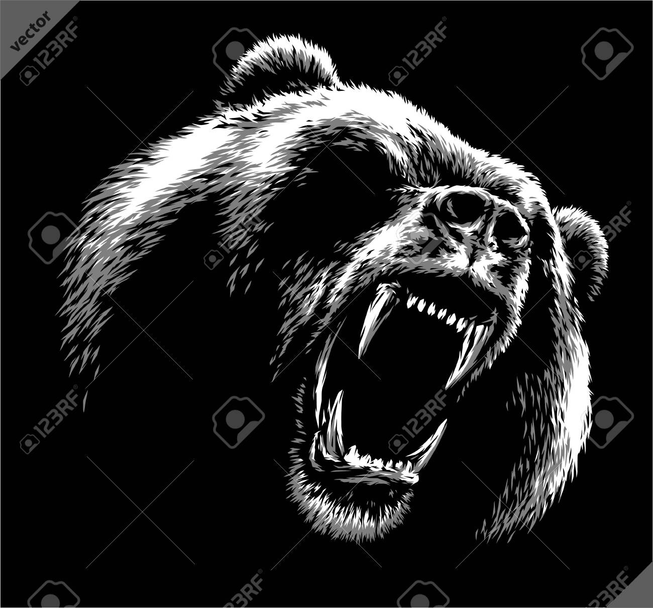 black and white linear draw bear vector illustration - 155802522