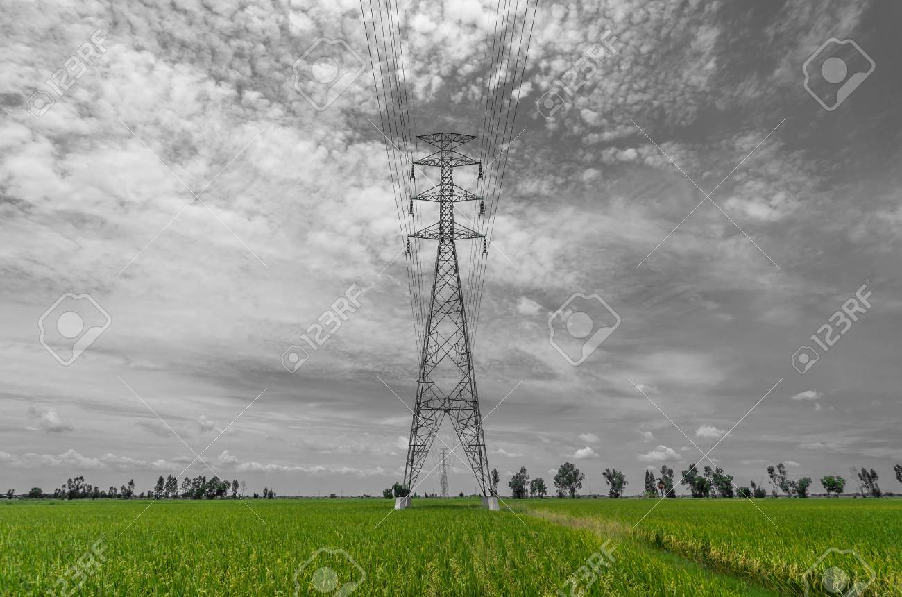 Electricity Post Over Green Rice Field With Gray Color Tone Sky ...