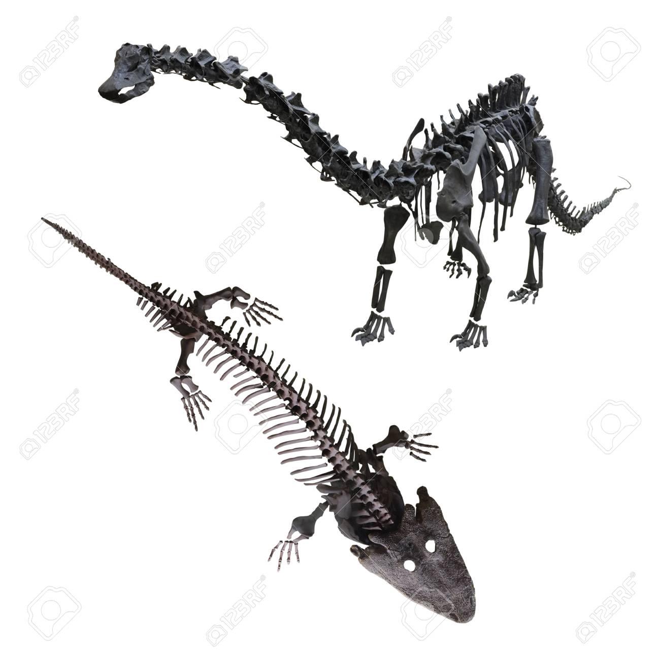 Dinosaurier Skelett Ausmalbilder : Wunderbar Ausmalbilder Dinosaurier Skelett Galerie Malvorlagen Von
