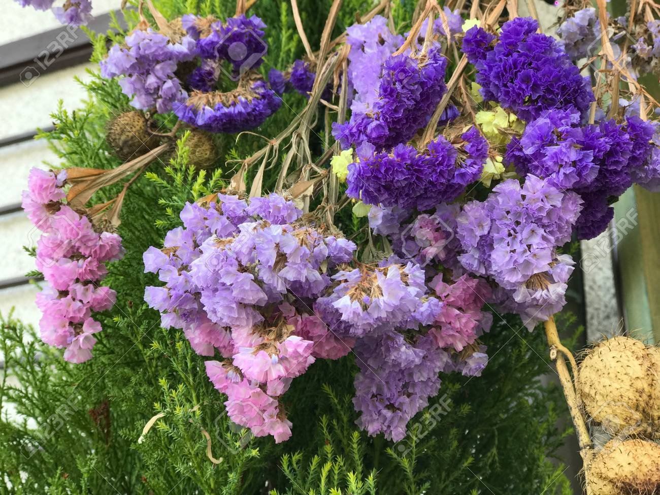 Colorful hanging of statice flowers also known as limonium or colorful hanging of statice flowers also known as limonium or sea lavender stock photo 98311397 mightylinksfo
