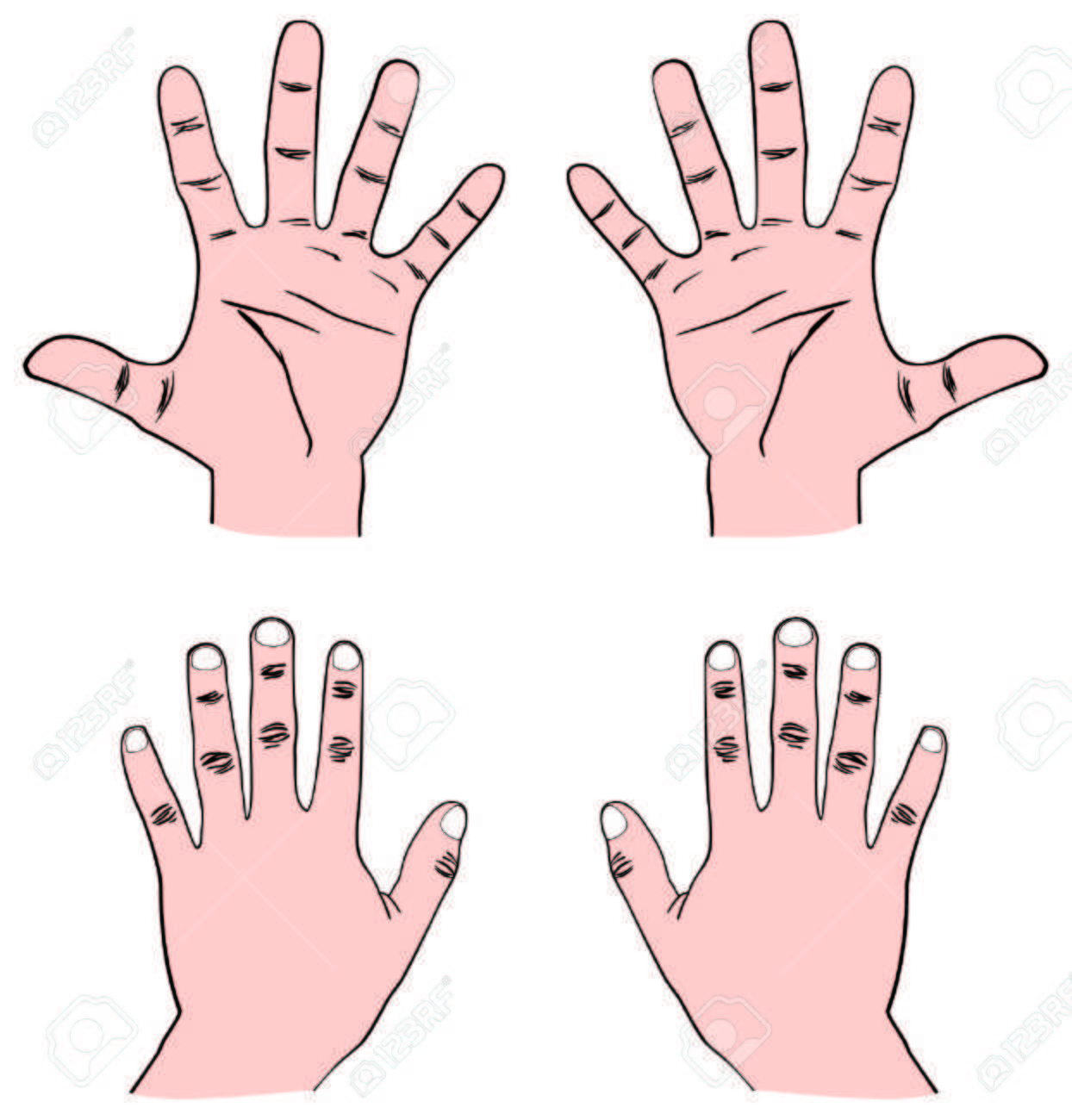 Vector - Pair Of Human Hands (Palm) - Front & Back View With ...