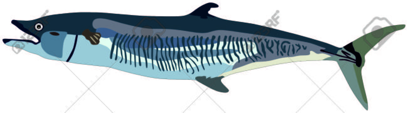 Mackerel Fish Lives Is Ocean And Under Deep Blue Water Life One Royalty Free Cliparts Vectors And Stock Illustration Image 71763805
