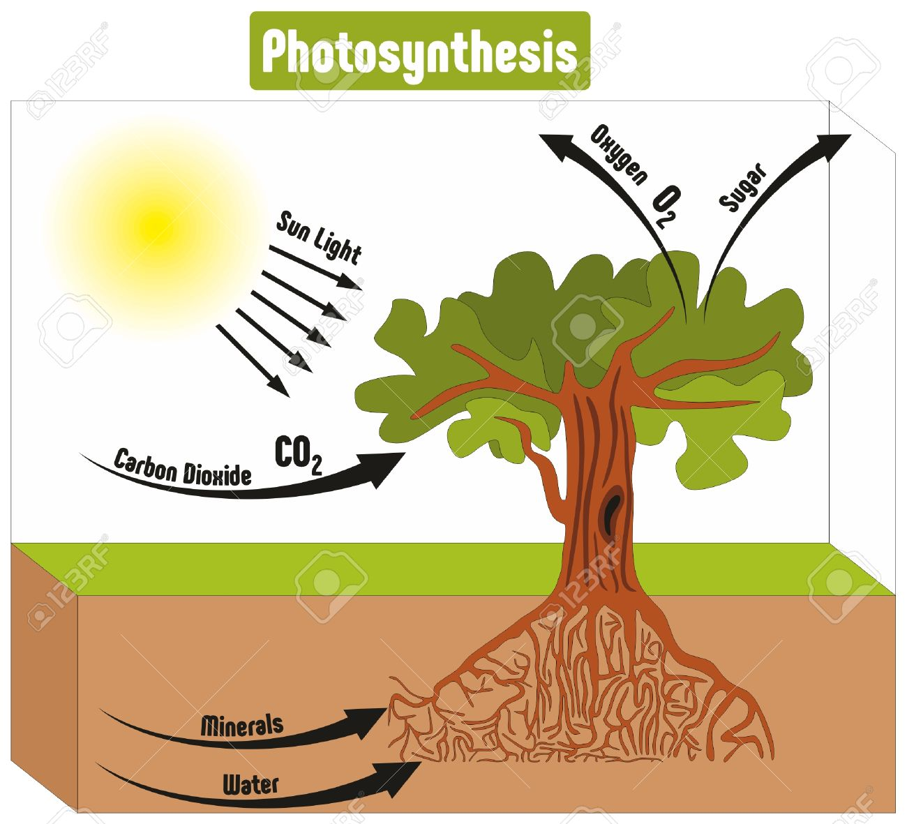 Photosynthesis process in plant diagram with all factors and photosynthesis process in plant diagram with all factors and outputs including sun light carbon dioxide minerals ccuart Images