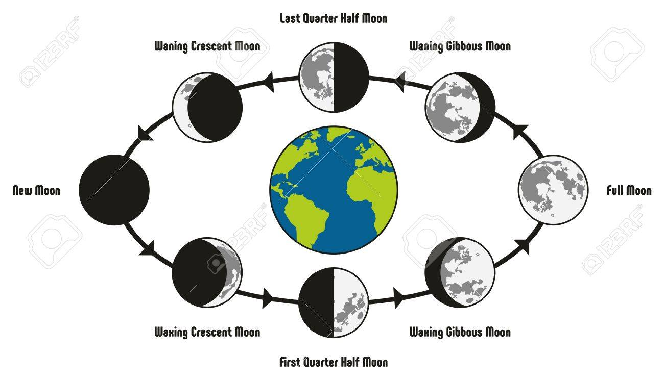 moon life cycle diagram including earth position and all phases