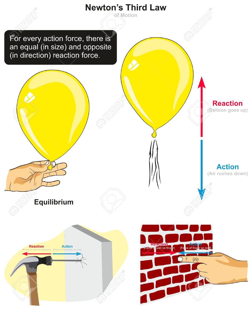 newton s third law of motion infographic diagram with examples