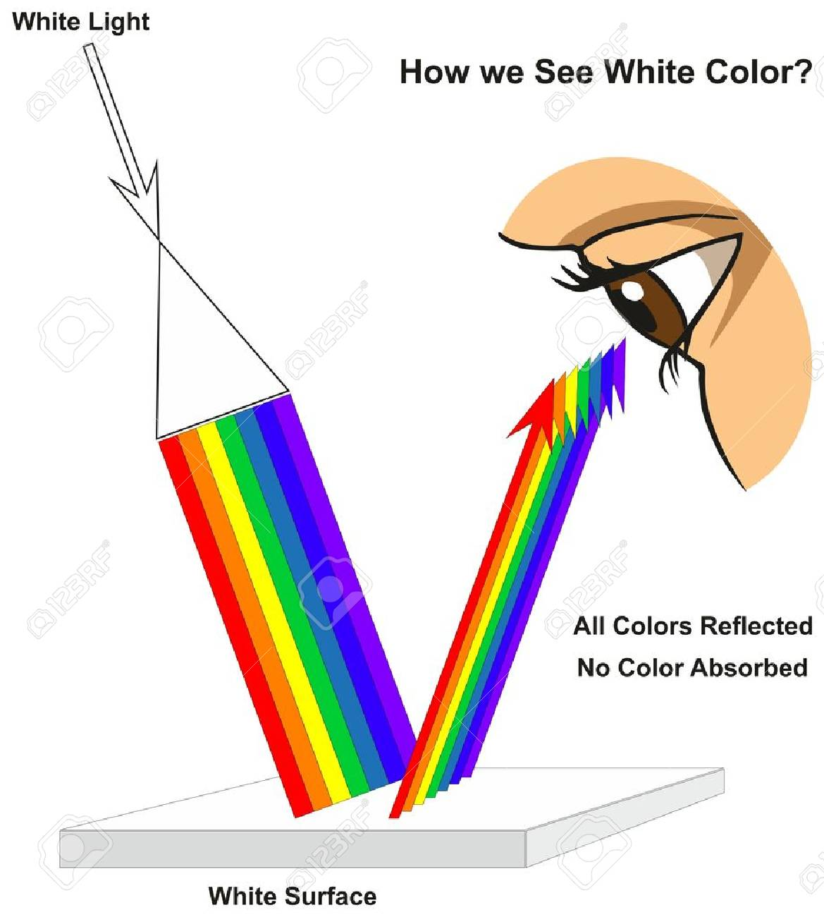 How we See White Color infographic diagram showing visible spectrum light on surface and colors reflected or absorbed according to its color for physics science education - 87964153