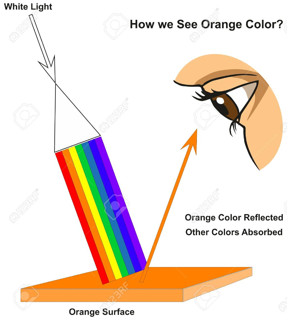 How we See Orange Color infographic diagram showing visible spectrum