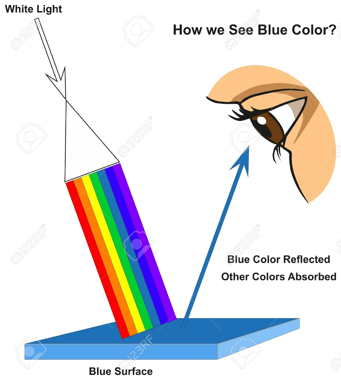 How we See Blue Color infographic diagram showing visible spectrum light on surface and colors reflected or absorbed according to its color for physics science education - 87967054