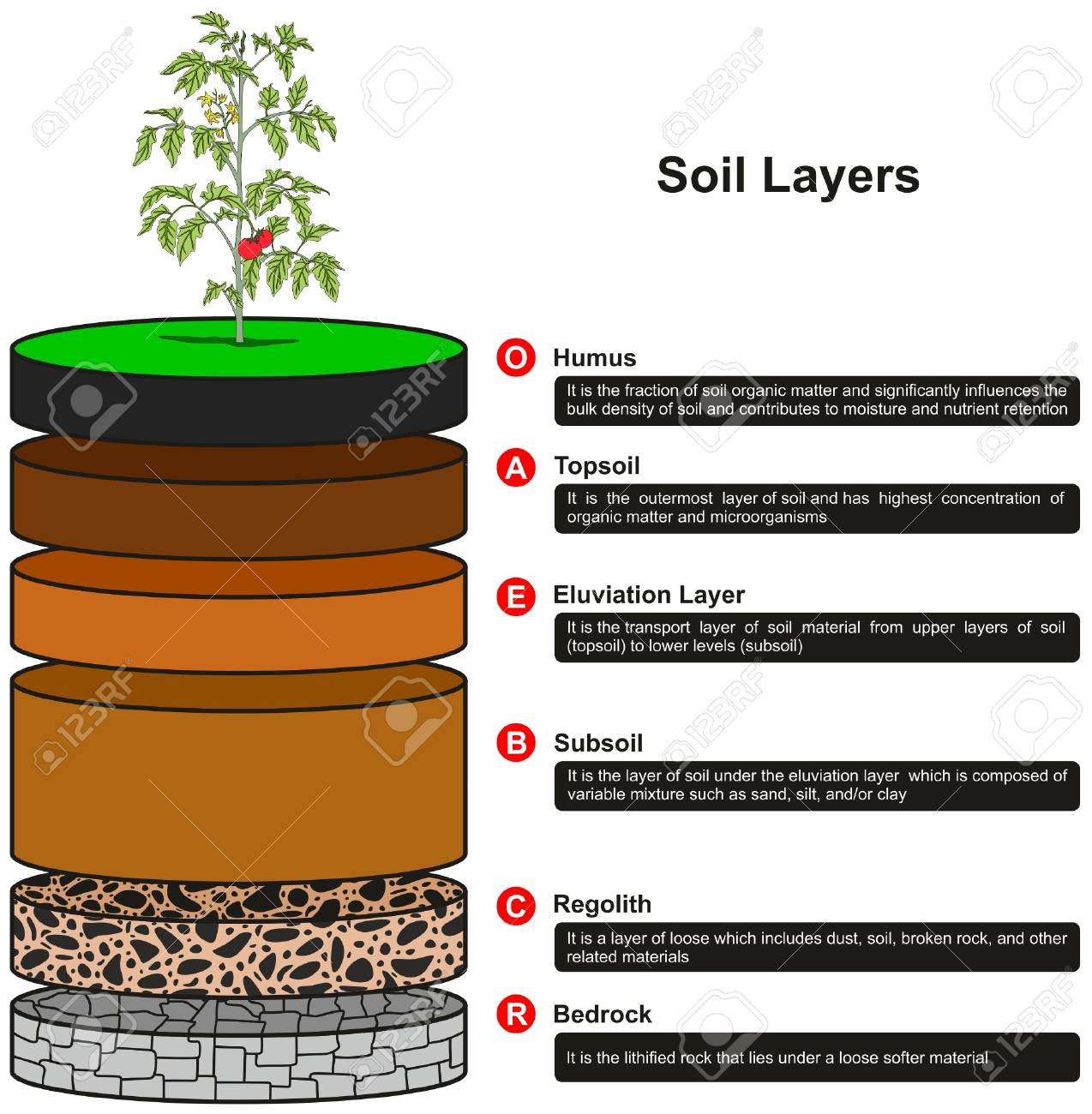 soil layers infographic diagram showing as slices including humus