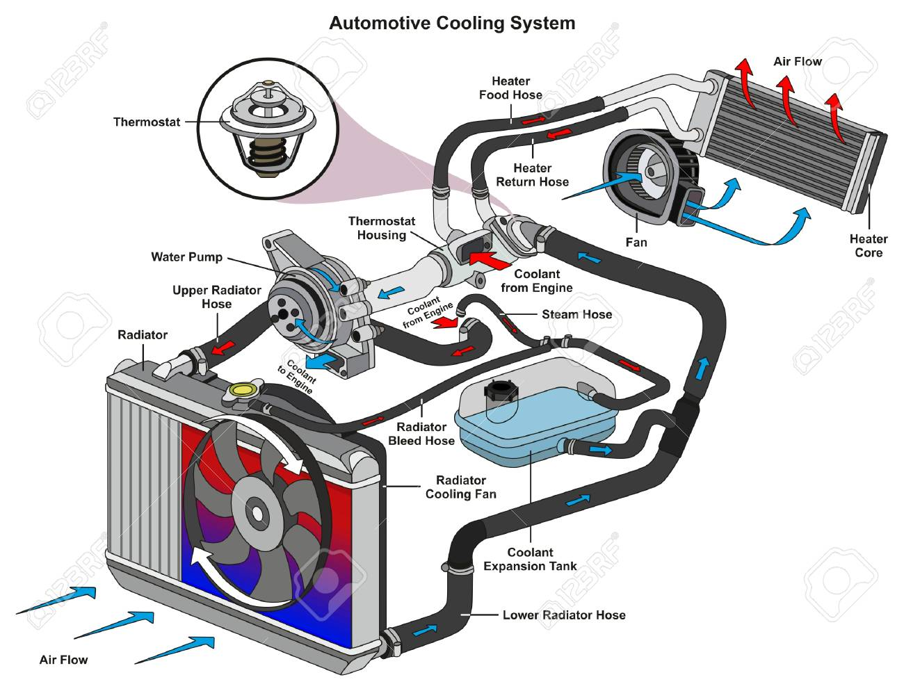 Automotive Cooling System infographic diagram showing process and all parts included radiator hoses coolant flow thermostat fan tank and air flow for mechanic and road traffic safety science education - 87963547