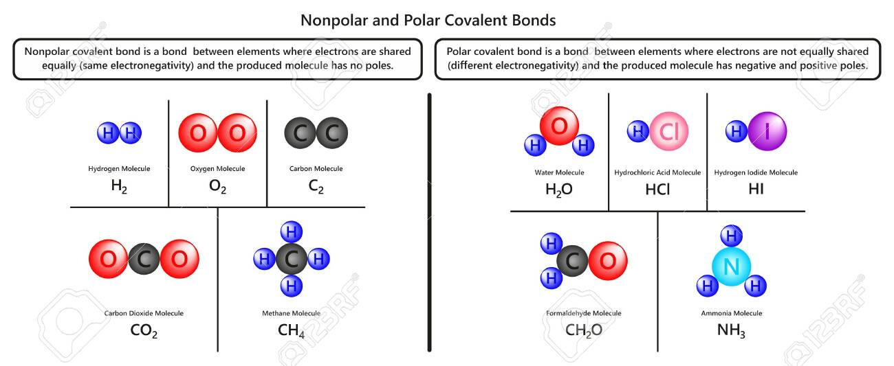 Nonpolar And Polar Covalent Bonds Infographic Diagram With Examples Royalty Free Cliparts Vectors And Stock Illustration Image 130476207