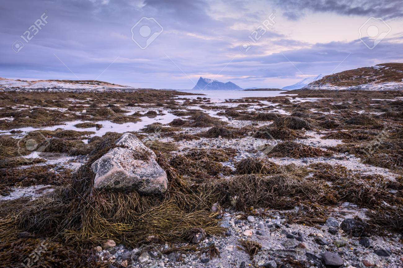 Early morning photograph of a scenic seascape with a rock in the foreground in Sommaroy, Norway Standard-Bild - 28649588