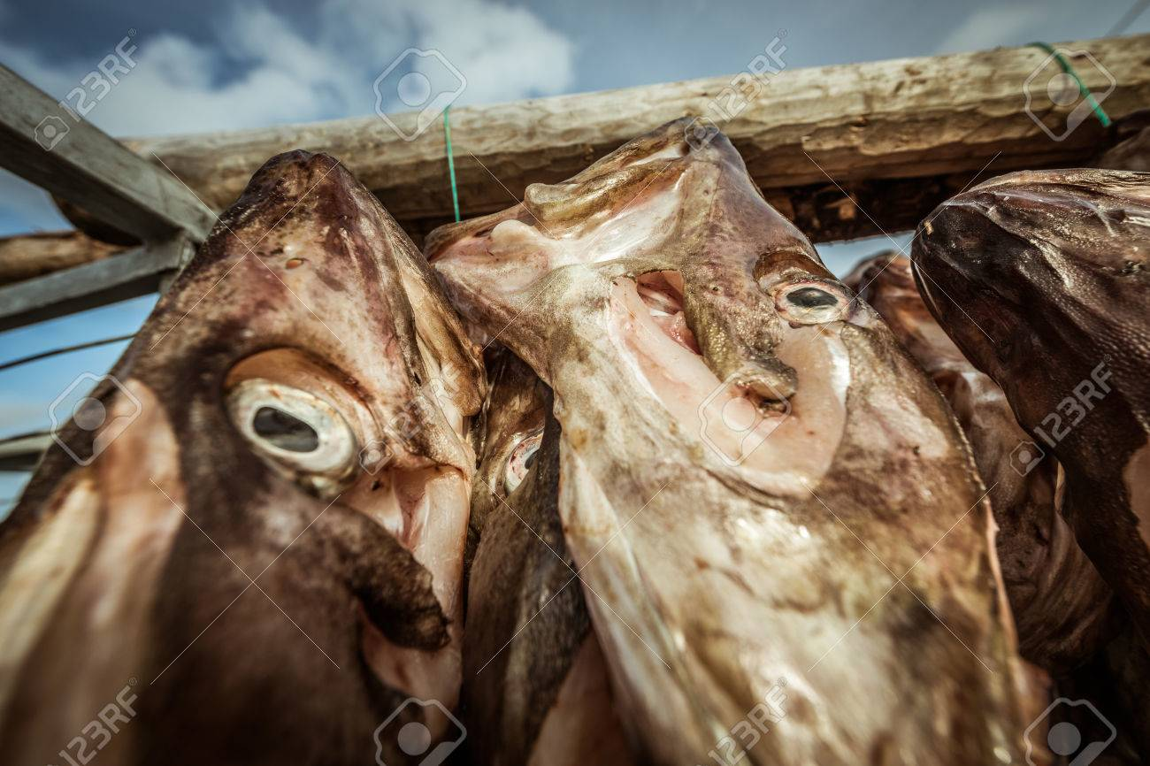 Salted Cod hanging up to dry in Sommaroy, Norway Standard-Bild - 28649692