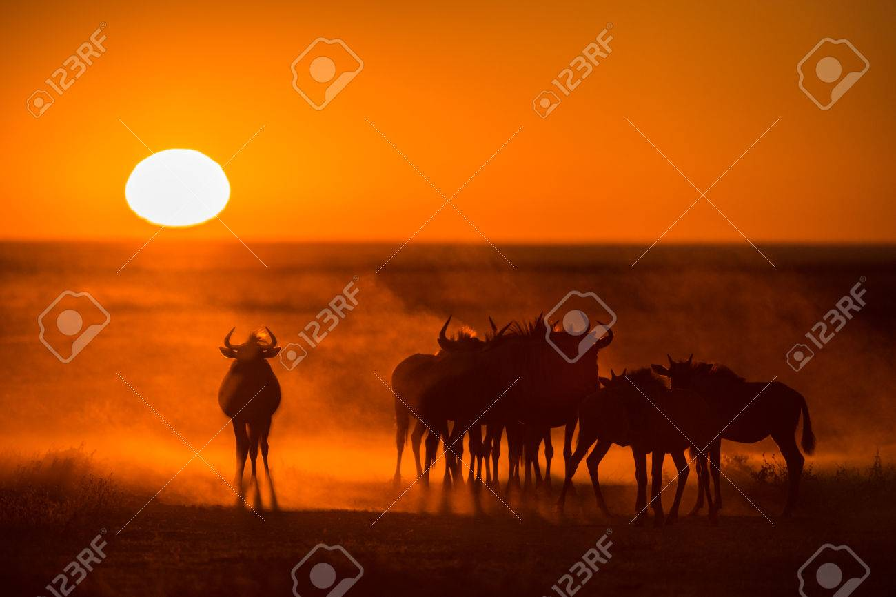 Sunrise in Etosha, Namibia with a herd of Wildebeest in the foreground Standard-Bild - 29688560