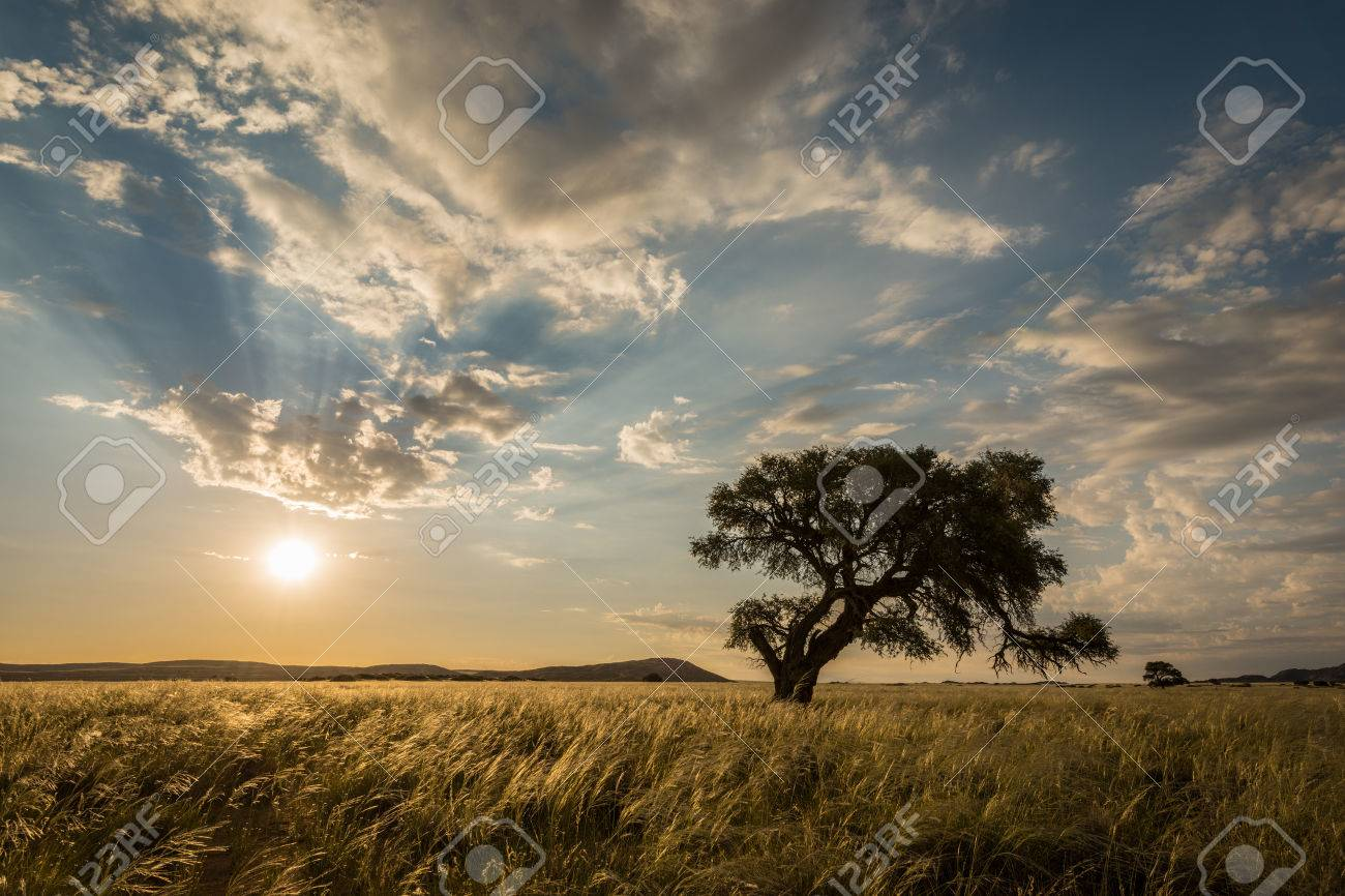 The sun setting behind a tree in the Sossusvlei, Namibia Standard-Bild - 29688562
