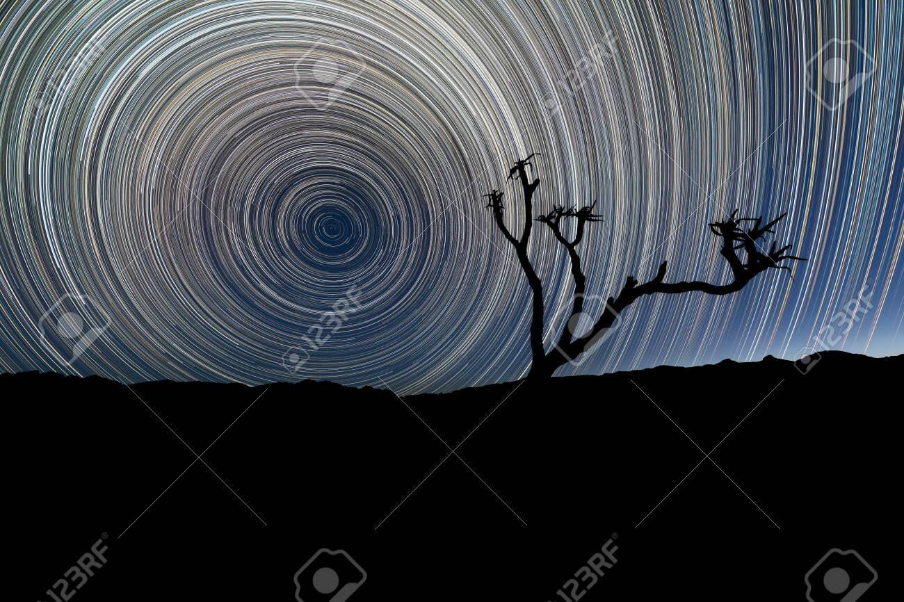 A beautiful night sky landscape with circular star trails, with a Quiver Tree silhouetted in the foreground and mountains on the horizon, in the Richtersveld National Park, South Africa. - 142556583