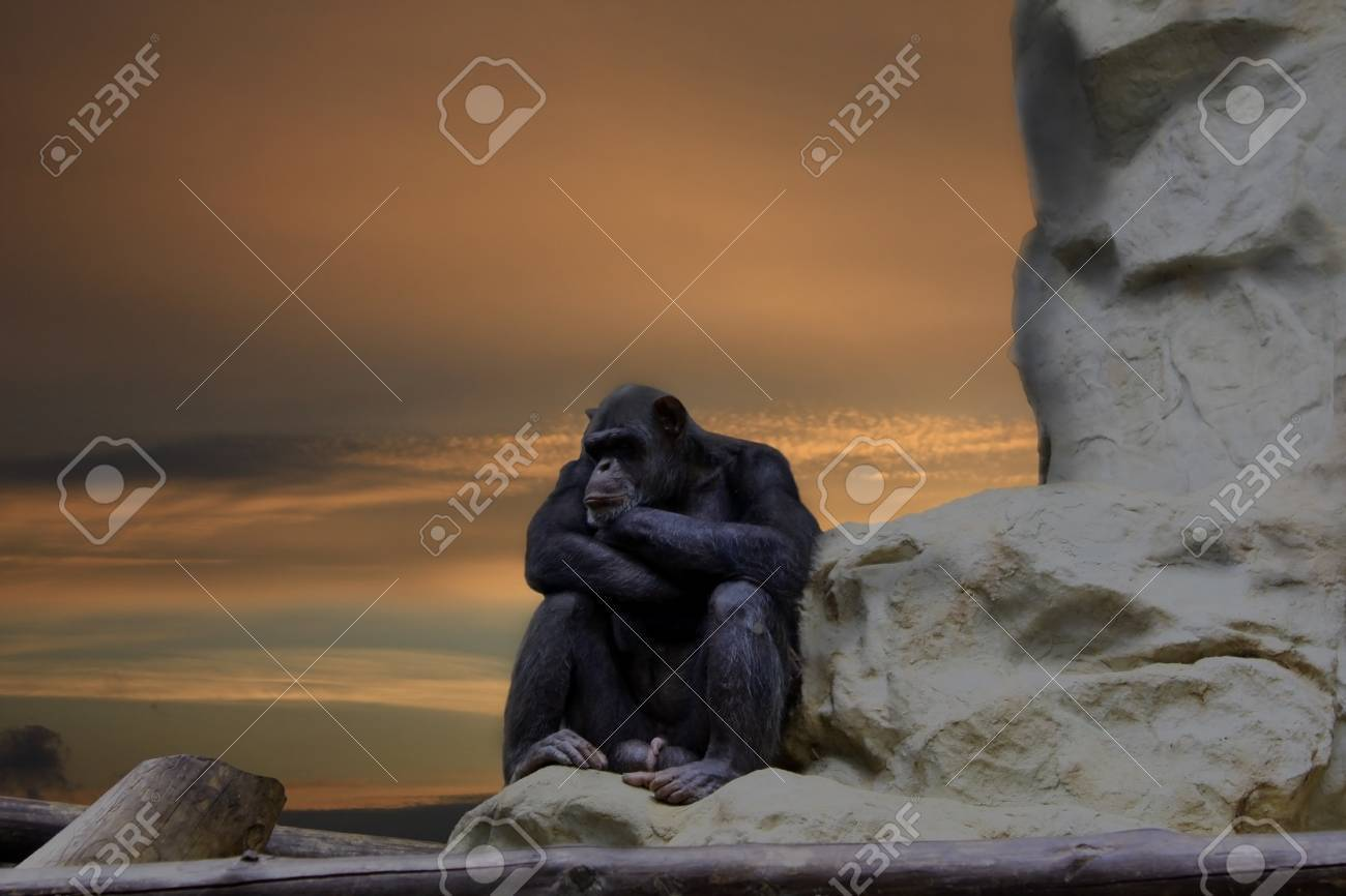Waiting for idea, chimp thinking on the rock Stock Photo - 14012615