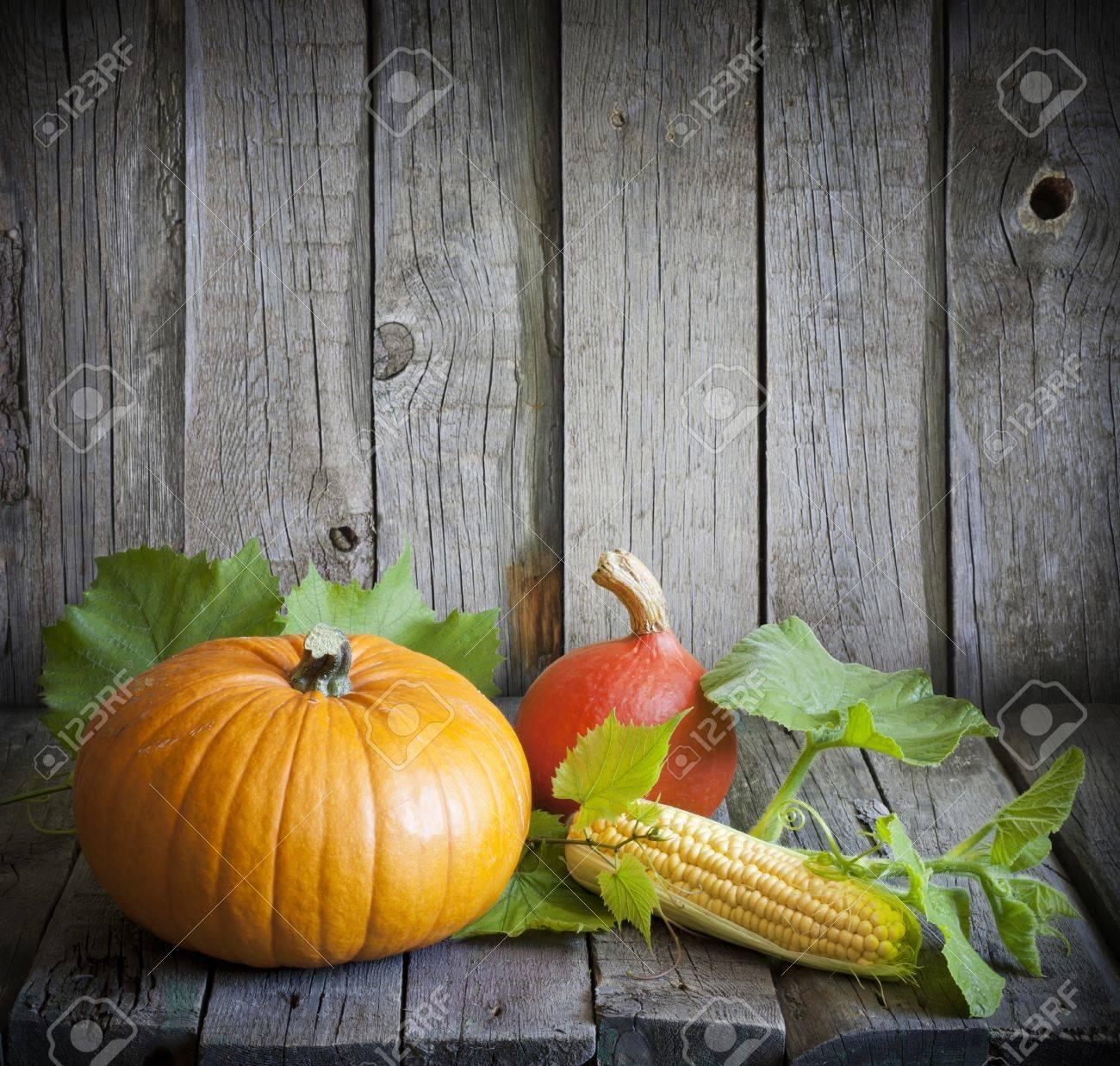 Autumn pumpkins and corn vintage still life Stock Photo - 15166528