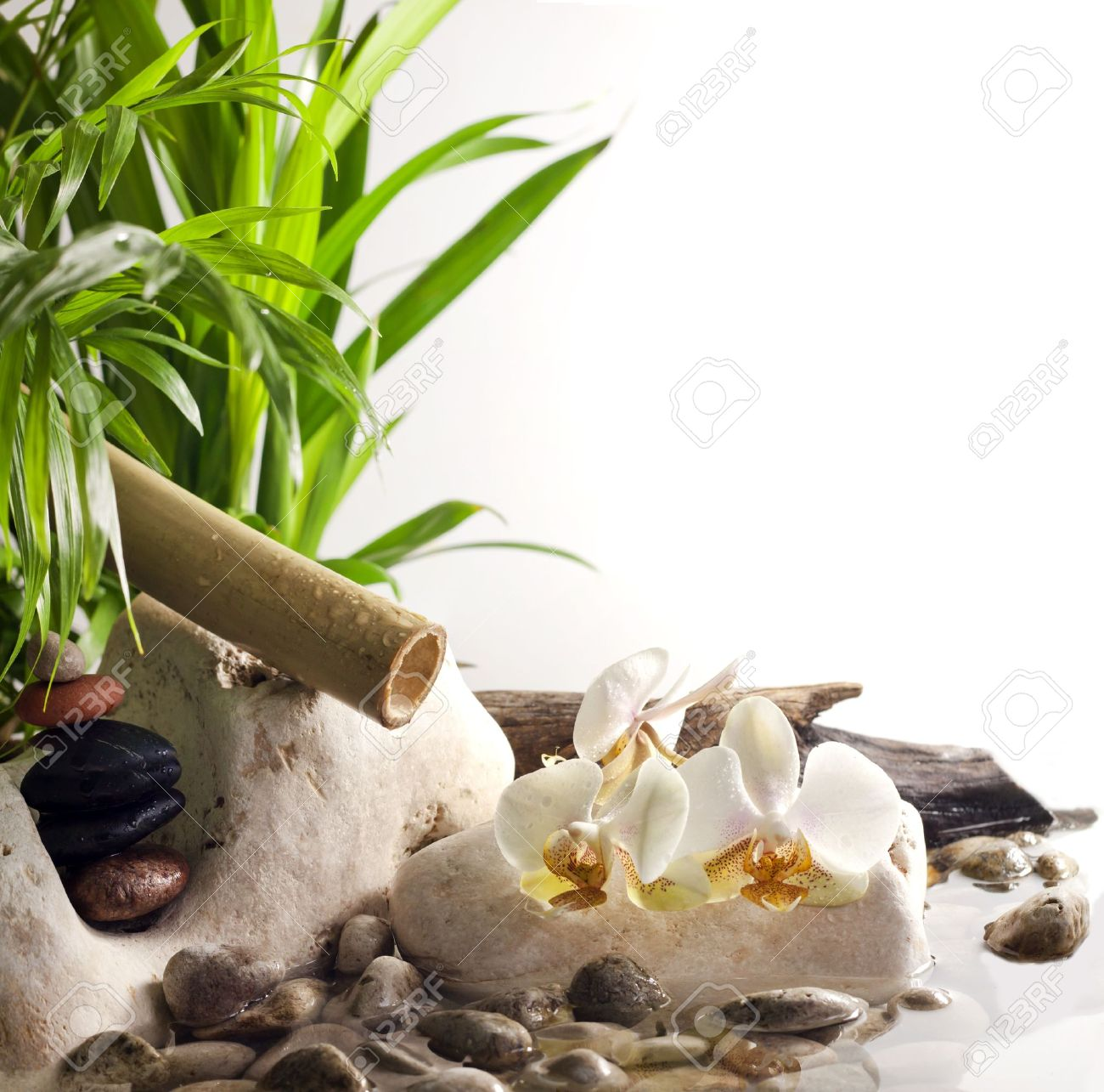Orchids and zen stones on water spa concept on white background Stock Photo - 16407494