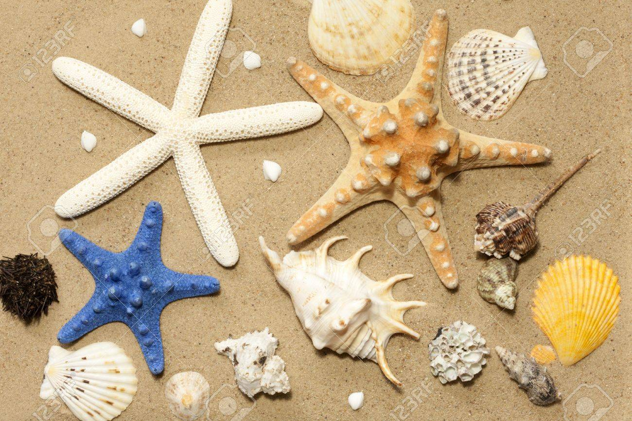 Starfish On The Beach Stock Photo Picture And Royalty Free Image