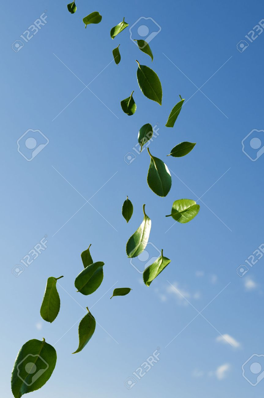 Leaves Blowing In The Wind Stock Photo Picture And Royalty Free Image Image 26029956