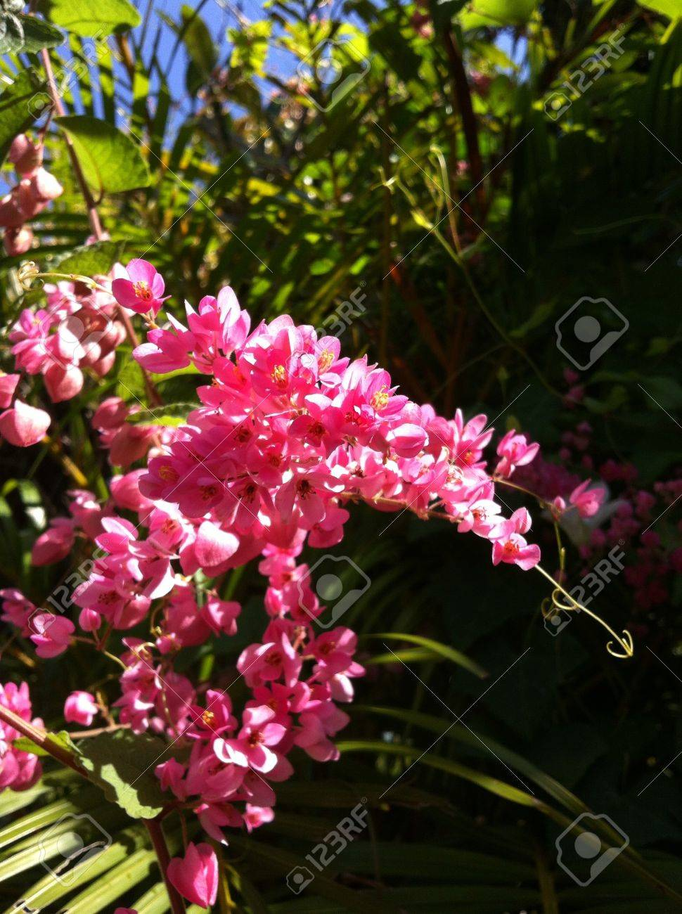 Pink Flower Stock Photo Picture And Royalty Free Image Image 23404436