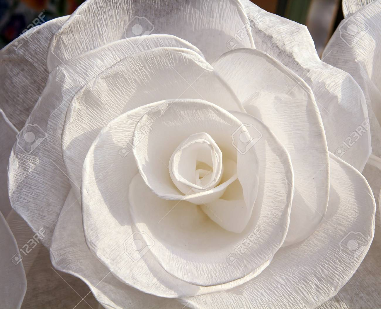 White Rose With Corrugated Paper Large Giant Paper Flowers Big