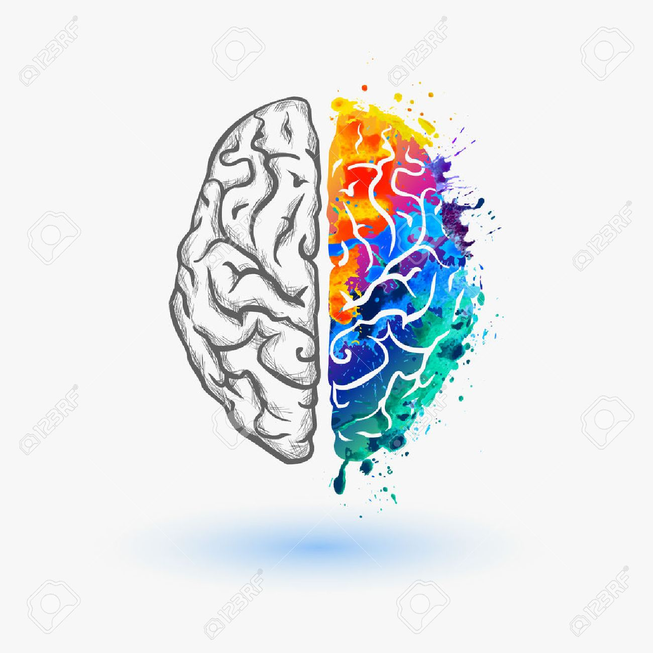 brain hemispheres - 52266081