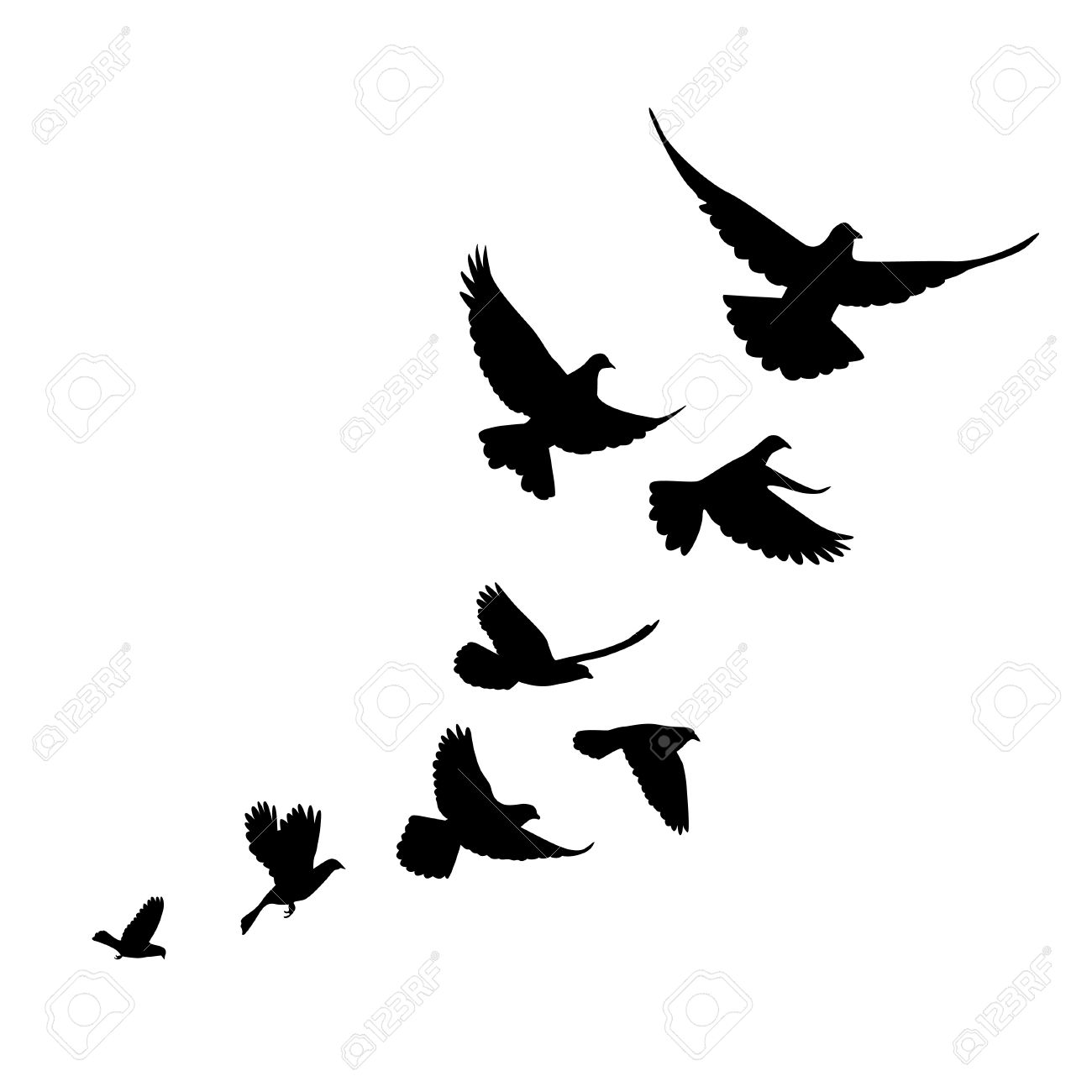 A flock of birds pigeons go up. Black silhouette on a white background. - 52727043