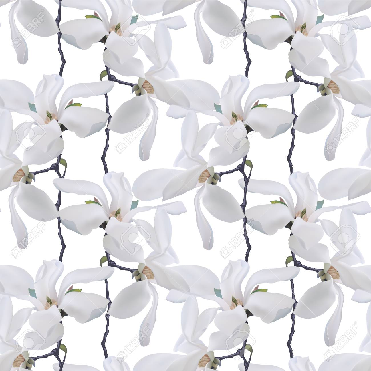 Seamless Vector Pattern White Magnolia Flowers Royalty Free