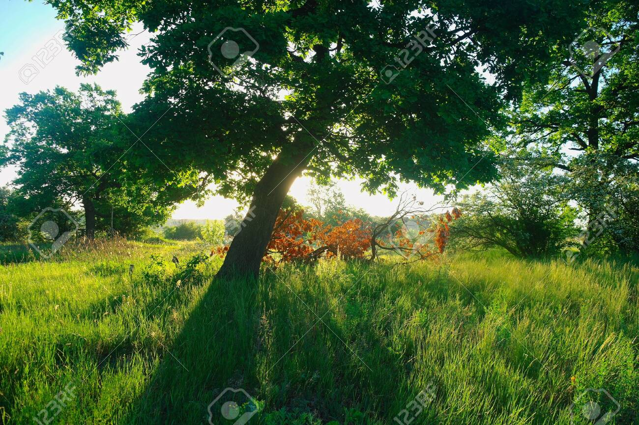 Sunny morning in a forest glade. - 138824579