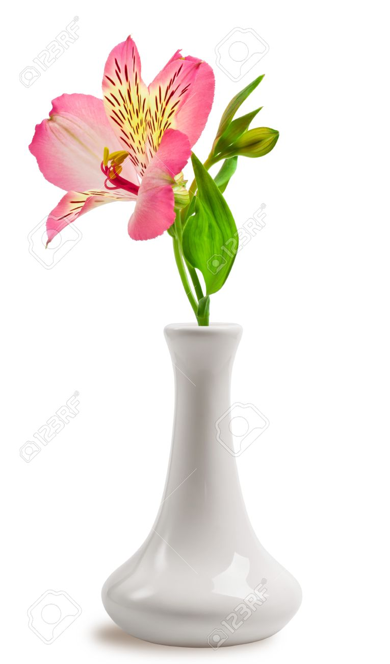 Beautiful lily flower in the vase Stock Photo - 15815879  sc 1 st  123RF.com & Beautiful Lily Flower In The Vase Stock Photo Picture And Royalty ...