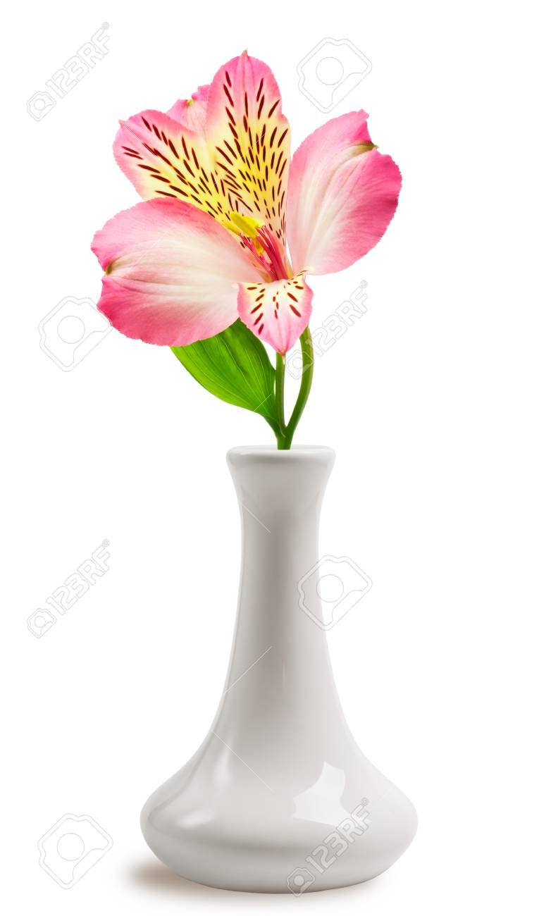 Beautiful lily flower in the vase stock photo picture and royalty beautiful lily flower in the vase stock photo 15815888 izmirmasajfo