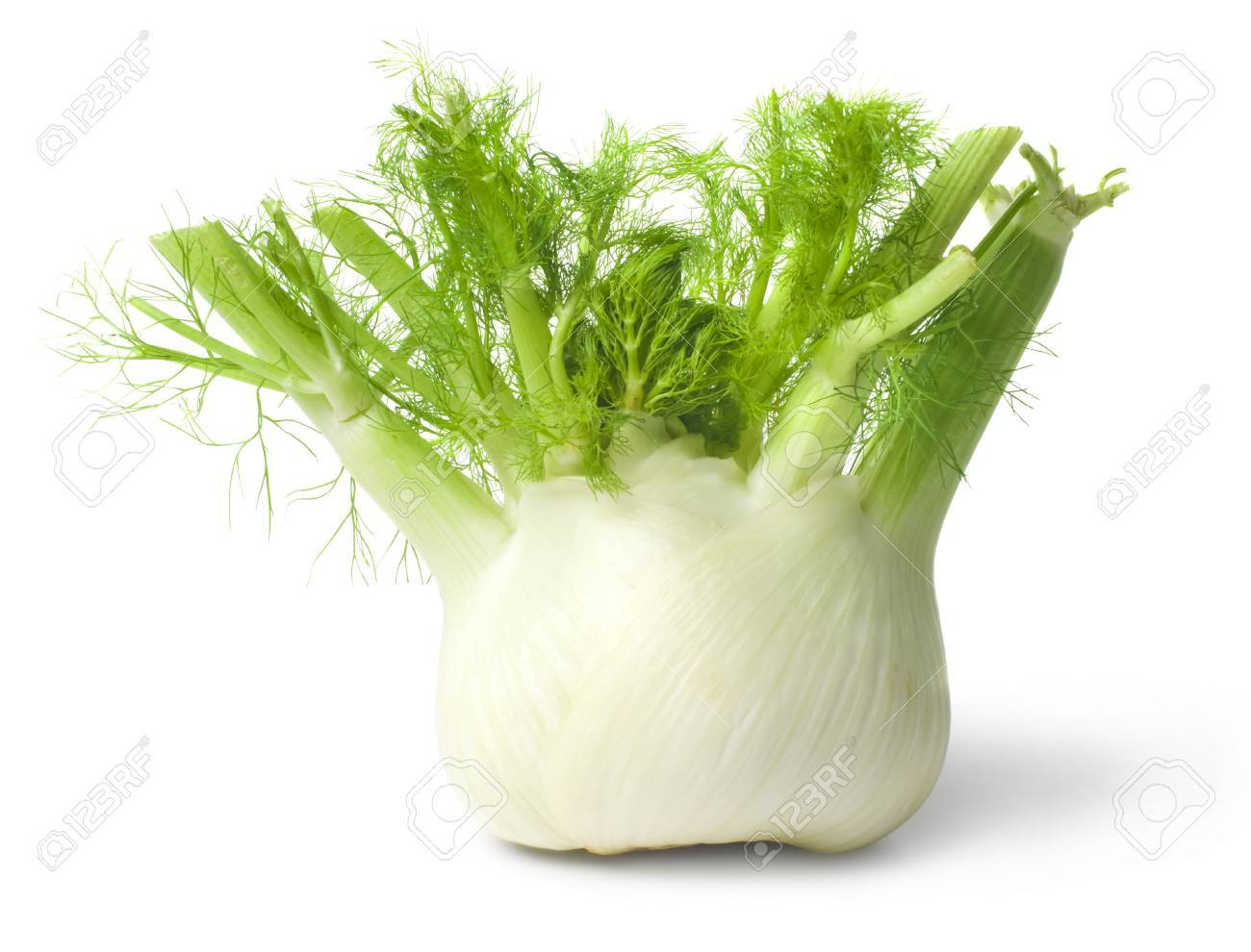 Fennel isolated on white background - 16221122