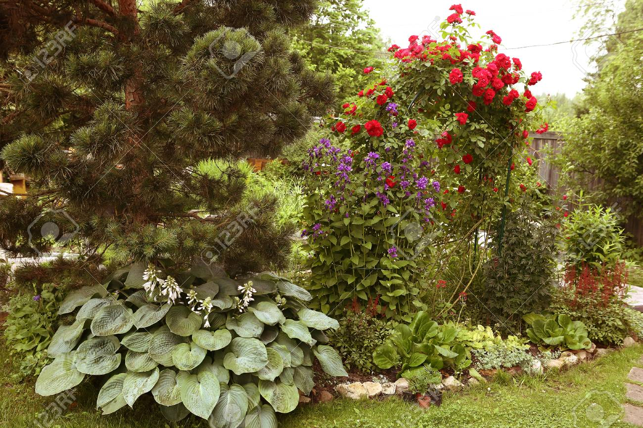 Beautiful Formal Garden Close Up Photo With Pine Tree And Red ...