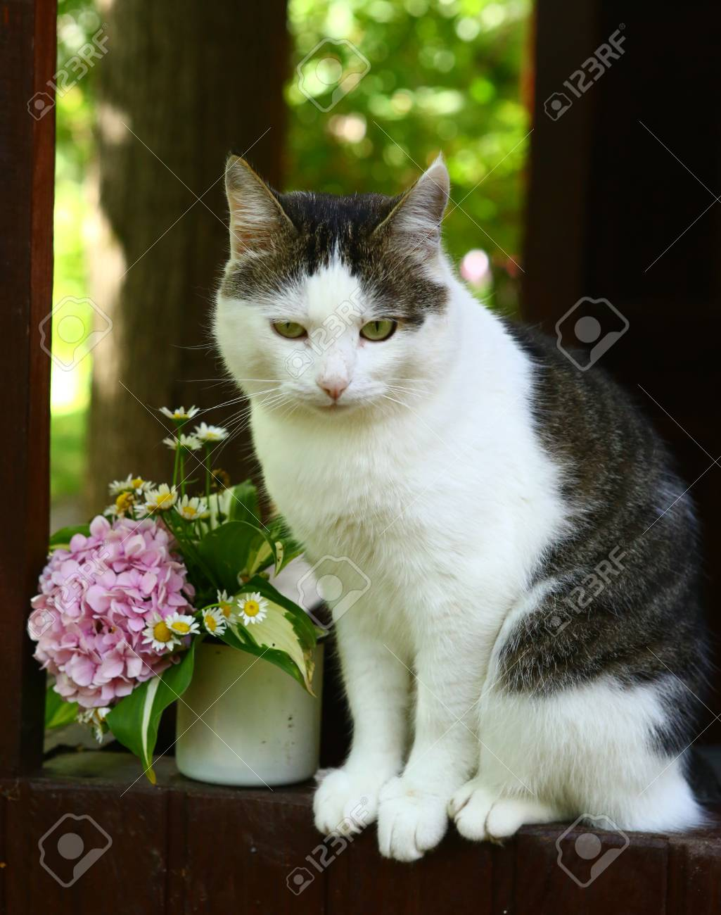 Cute Cat With Bow And Hydrangea Pink Flowers Bouquet On The Summer ...