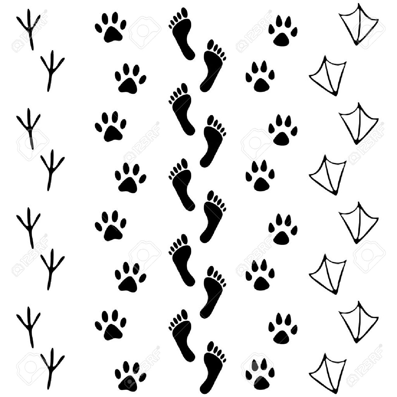 Vector set of human and animal, bird footprints icon. Collection of human foots, cat, dog, bird, chicken, hen, crow, duck footprint. Design for frames, invitation and greeting cards - 52414055